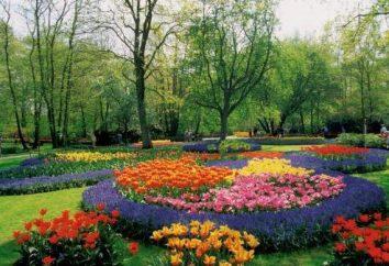 Idealna łóżko. Jakie kwiaty kwitną przez całe lato?