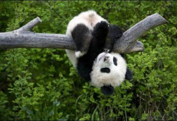 Najrzadszych zwierząt – zagrożonych gatunków
