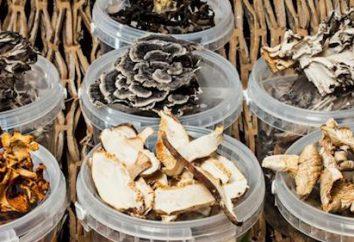 ¿Qué papel juegan en las setas de los ecosistemas? Significado de los hongos en la naturaleza