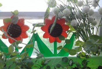 Un huerto en la ventana en el vivero: diseño (ideas)
