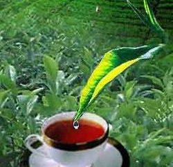 """""""Akbar"""" – té para un buen comienzo y la finalización con éxito de la jornada"""