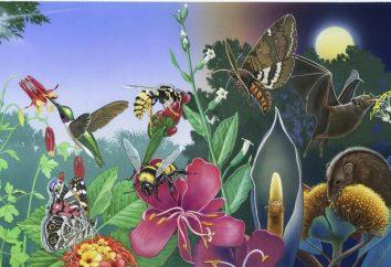 Pollinisation des plantes: description, caractéristiques, étapes et types