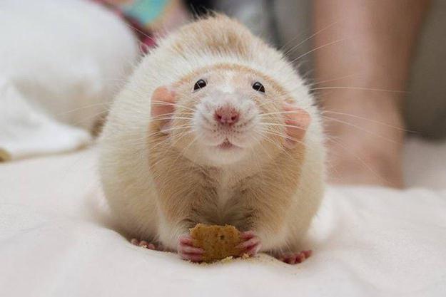 Nett Drähte Die Von Ratten Gekaut Wurden Galerie - Die Besten ...
