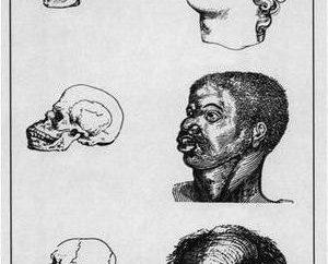Darwinismo social. características teoría