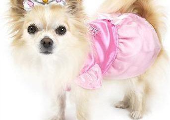Odebrać nazwę oryginalnego psa dla dziewczynek