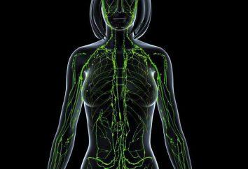 Qu'est-ce que les ganglions lymphatiques régionaux?