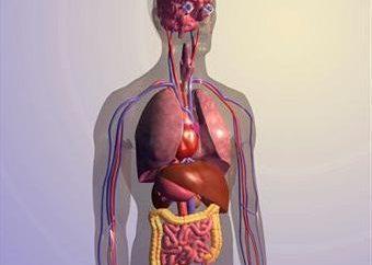To wygląda jak zwykłe lustro oraz lokalizacja narządów u ludzi