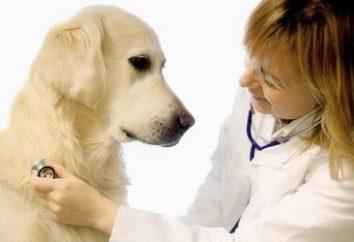 Jaka jest normalna temperatura u psów?
