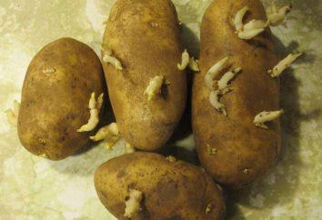 """Mid-Kartoffeln """"Aurora"""": Beschreibung der Sorte. Aufgewachsen in Russland"""