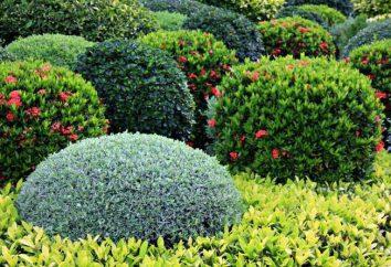 Planta resistente à seca interior e mobiliário de jardim: os nomes, os exemplos