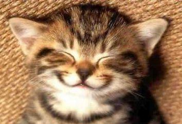 Dlaczego koty mruczą? Pytanie wielu właścicieli zwierząt domowych