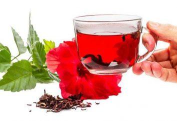Propriedades úteis de Hibiscus chá e contra-indicações. Como fazer e como beber?