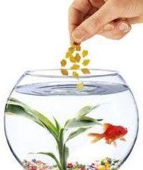 Karma dla ryb: rodzaje i charakterystyka diety