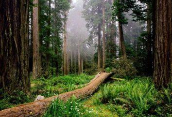 Interpretazione dei sogni: ciò che sogna foresta