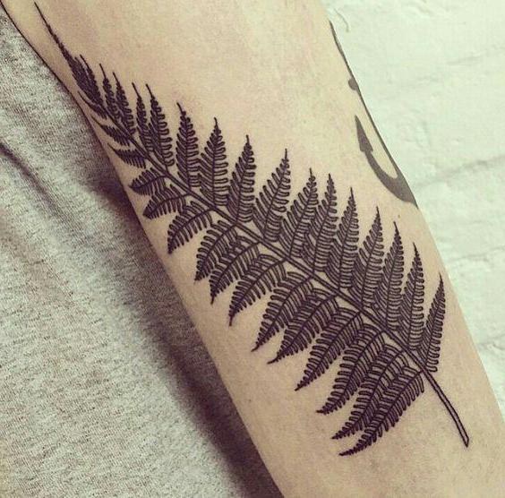 Tatuaż Fern Na Rękę Wartość