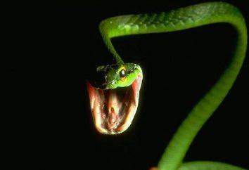Fatti utili e interessanti sui serpenti