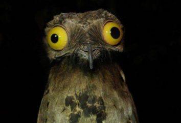 Come sono il concorso fotografico più divertente Commedia Wildlife Photography Awards di quest'anno?