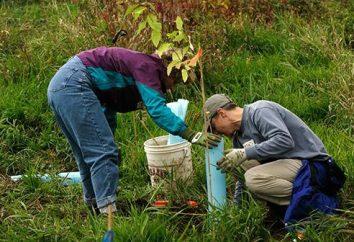 La plantation d'arbres: les étapes
