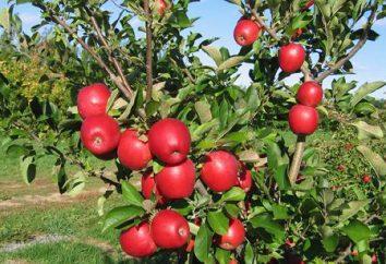 Comment cuire une confiture de pommes à la cannelle. Recettes et quelques conseils