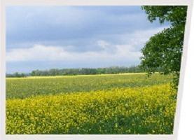 Qual è il Catasto Terreni Stato