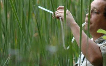 Entomolog – zawód związany z badaniem owadów. Jak istotne jest to?