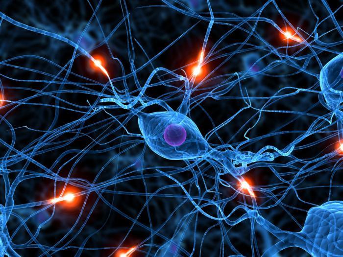 conflit vasculo nerveux du nerf auditif