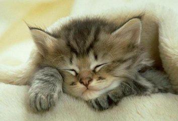 Ile koty spać dziennie? Co wpływa na czas trwania snu?