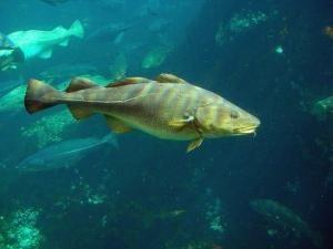 Interpretuje książkę wymarzony: żywe ryby dobrych snów