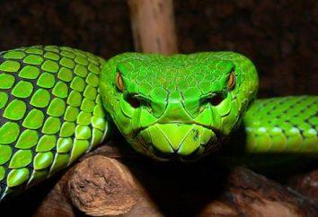 Snake snake – mit czy rzeczywistość?