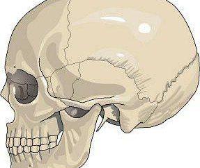 Stałe połączenie kości … Co to jest połączenie kości są stałe?