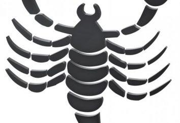 Jak narysować skorpiona: Instrukcje krok po kroku