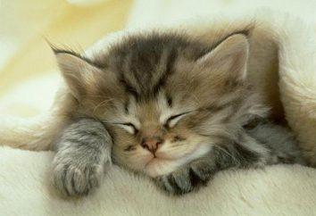 Quel genre de rêve est-ce? Pour rêver de chats – pourquoi ça?