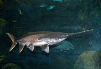 Wie nennt man einen Fisch mit einer langen Nase?