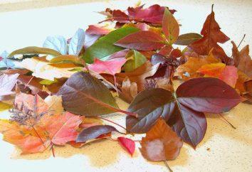 Blumen aus den Blättern der Bäume mit seinen eigenen Händen: Meisterklasse mit Schritt für Schritt-Fotos