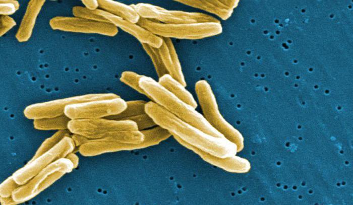 pathogene bakterien beispiele
