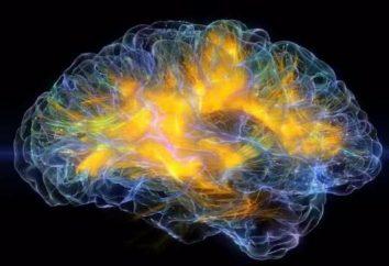 Qu'est-ce qu'il est dans le cerveau: la structure