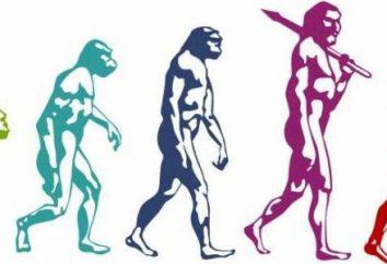 La evolución en biología – una historia de …