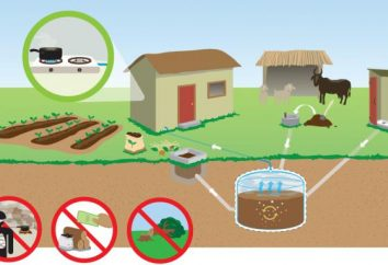 Jak uzyskać biogaz z rękami?