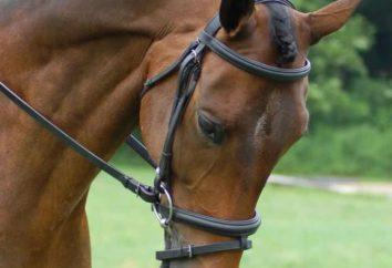 Co ona podoba, to uzda dla konia? Czy to możliwe, aby tworzyć własne ręce?