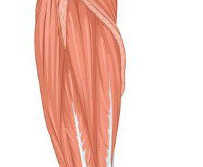Popularność mięśni: funkcje, przyczyny urazów, pomoc