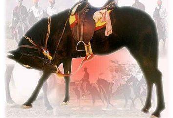 Don cavalos da raça: descrição e fotos
