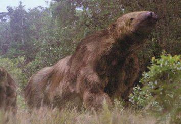 Gigante Megatherium pereza: Descripción
