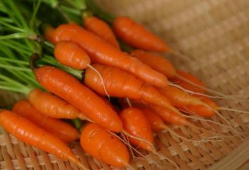 cenoura chá: receitas