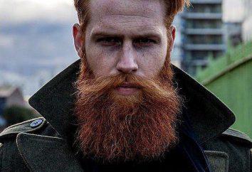 """""""En un bigote no sopla"""": el significado de la fraseología, el significado y los ejemplos de uso. ¿Es bueno no trabajar en absoluto?"""