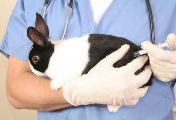 Vaccinations contre la myxomatose et le lapin VGBK: Quand le dosage. vaccin associé contre la myxomatose et la maladie hémorragique virale du lapin