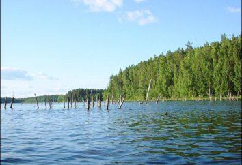 Jezioro Psków: fotografie, rekreacji i wędkowania. Opinie na temat wypoczynku w Lake Psków