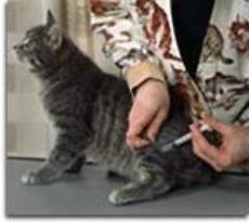 ¿Cómo poner inyecciones a los animales ¿verdad?