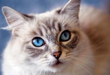 Infección viral o peritonitis en gatos: síntomas y tratamiento