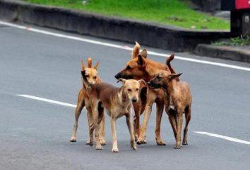 Bezpańskie psy: gdzie jechać do Moskwy?