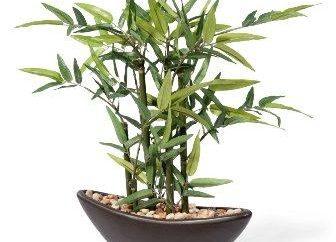 Come prendersi cura di bambù in casa: consigli